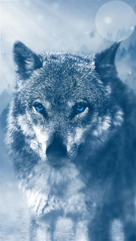 Wild Wolf 4K Wallpapers   HD Wallpapers   ID #19486